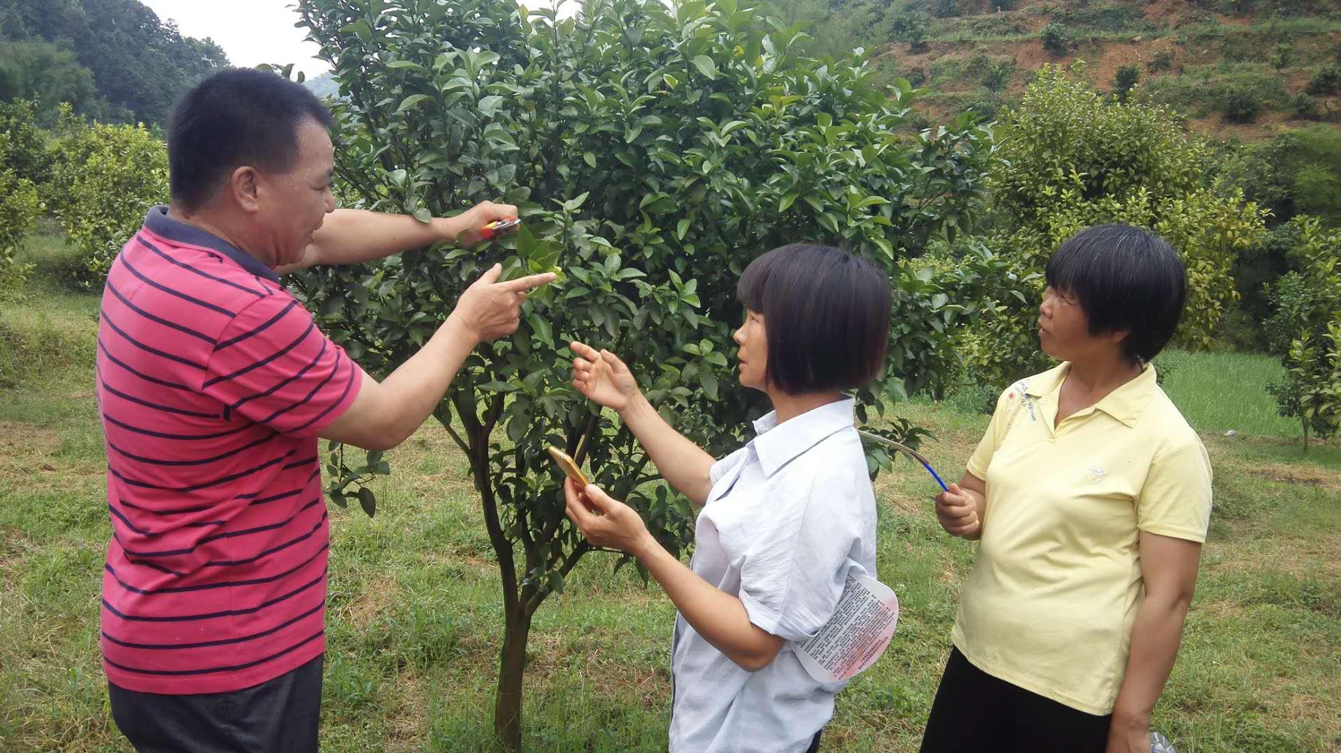 图为县科技特派员何宗书向村民亲授沙糖桔种植护理技术.jpg
